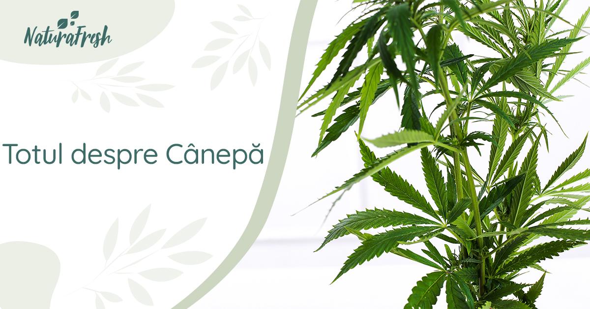 marijuana face pierdere în greutate)