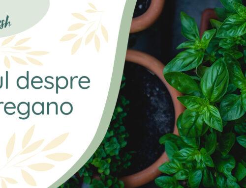 Totul despre: Oregano- 10 proprietăți și beneficii