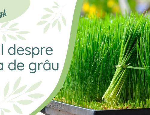 Totul despre iarbă de grâu – 5 beneficii și recomandări