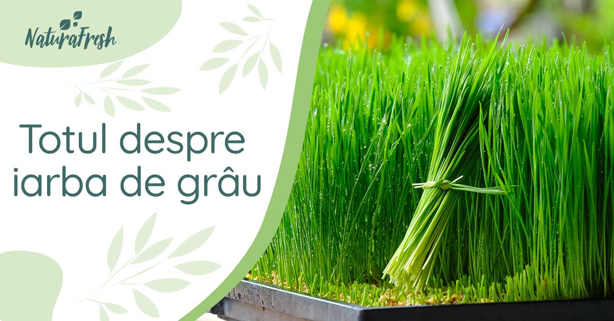 Totul despre iarbă de grâu 5 beneficii și recomandări - NaturaFresh - Iarbă de grâu