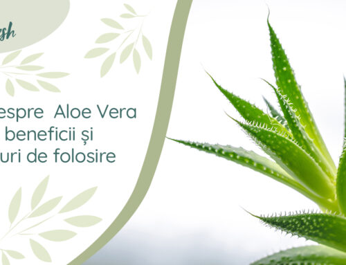Totul despre Aloe Vera – 10 beneficii și moduri de folosire